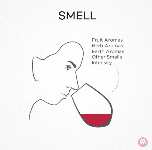 how-to-taste-wine-step-2