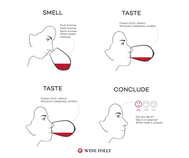 how-to-taste-wine-steps